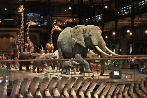 La_galerie_de_lEvolution_Museum_National_dHistoire_Naturelle.jpg